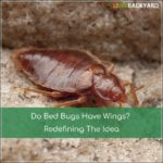 Does Bed Bugs Have Wings