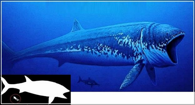 Largest Animal In The World Of All Time