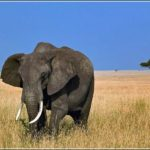 Largest Animal In The World On Land