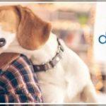 Nationwide Pet Insurance Reviews 2018