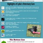 Pet Insurance For Dogs With Cancer