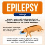 Pet Insurance For Dogs With Epilepsy